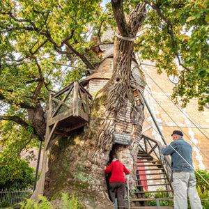 Pénétrez au coeur du plus vieux chêne de France