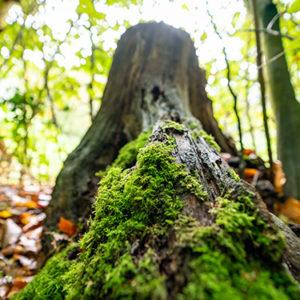 Parcs, bois et forêts
